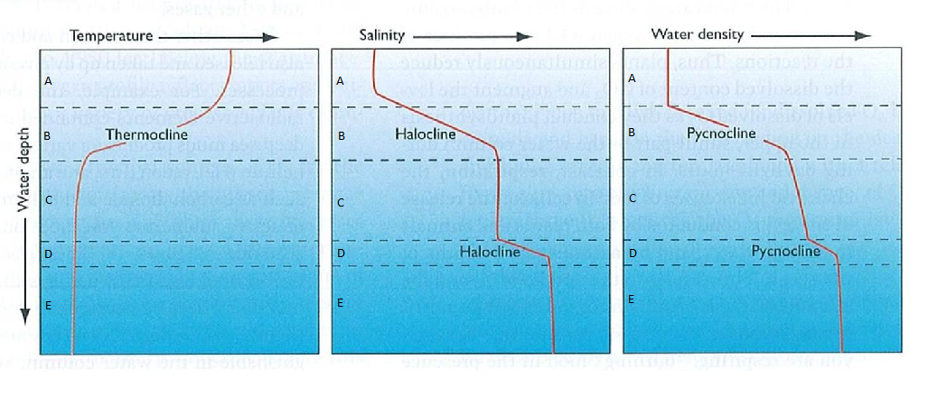 relationship between thermocline halocline and pycnocline ocean